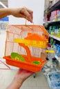 Orange bird cage Royalty Free Stock Photo