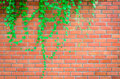 Orange block wall. Royalty Free Stock Photo