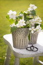 Orange blossom and scissors on rustic stool in the garden Stock Images