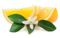 Orange and blossom slices with a flower leaves on a white background Royalty Free Stock Images