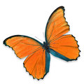 Orange butterfly Royalty Free Stock Photo