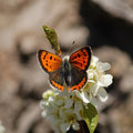 Orange Butterfly on flower Stock Photo