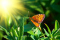 Orange butterfly on the leaves Royalty Free Stock Photo