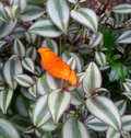 Orange butterfly on leaves Royalty Free Stock Photo
