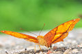 Orange butterfly on nature Royalty Free Stock Image