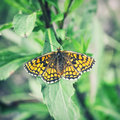 Orange butterfly  sitting on leaves Royalty Free Stock Photo