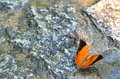 Orange butterfly an spreads its wings while resting on the granite ground at the park in kuala lumpur the park Stock Photo