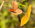 Orange Butterfly on yellow leaf Royalty Free Stock Photo