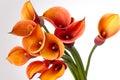 Bouquet of orange Calla lilies Royalty Free Stock Photo