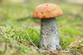 Orange-cap mushroom in moss Royalty Free Stock Photo