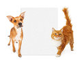 Orange cat and dog with blank sign Stock Images
