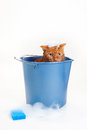 Orange Cat Getting a Bath in a Bucket Royalty Free Stock Photo