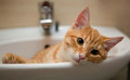 Orange cat lies in the laver Royalty Free Stock Photo