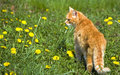 Orange cat outdoor Stock Photos