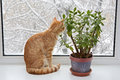 Orange cat sitting in the window through glass winter and snow Stock Photography