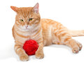 Orange cat and a sphere of red wool Royalty Free Stock Photo