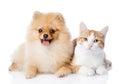 Orange Cat And Spitz Dog Toget...