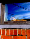 Orange cat in the windowsill blue sky and cloud reflections Royalty Free Stock Photography