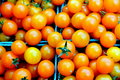 Orange cherry tomatoes green plastic baskets filled with sweet provide a tantalizing burst of color at the local grower s market Royalty Free Stock Photos