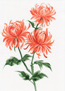 Orange chrysanthemum watercolor painting of asian style Royalty Free Stock Photography