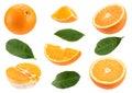 Orange citrus fruit set Royalty Free Stock Photo