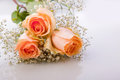 Orange colored roses Royalty Free Stock Image
