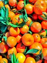 Orange colored tangerines big and juicy Royalty Free Stock Images
