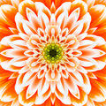 Orange concentric flower center mandala kaleidoscopic design macro close up Stock Image