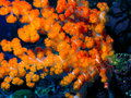 Orange coral photo of take underwater Royalty Free Stock Image
