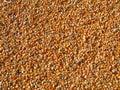 Orange Corn Kernels
