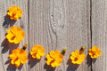 Orange cosmos flowers create a frame on old wooden background Stock Images