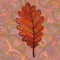 Orange decorative oak leaf. Royalty Free Stock Photo