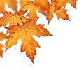 Orange fall leaves border Royalty Free Stock Photo