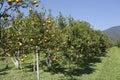Orange farm Royalty Free Stock Photo