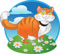 Orange fat cat on the color background Stock Images