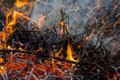 Orange fire flames ashes and smoke of the dying camp with burning twigs Stock Images