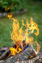 Orange flame in the campfire. Royalty Free Stock Photo
