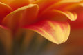 Orange flower abstract closeup of an Royalty Free Stock Images