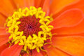 Orange flower the bright breezy vivid Stock Image
