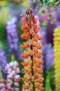 Orange flower close up on sunshine day Royalty Free Stock Photo