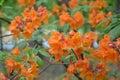Orange flower petals Royalty Free Stock Photo