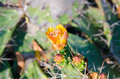 Orange Flower on top of a Green Cactus Royalty Free Stock Photo