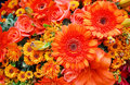Orange flowers Stock Images