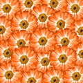 Orange flowers background flower consisting of hundreds of filling the whole frame Royalty Free Stock Image