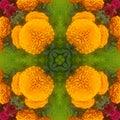 Orange Flowers beatiful garden