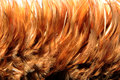 Orange Fur From Feather