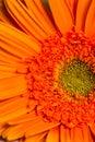 Blume Blühen