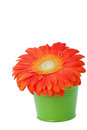 Orange gerbera daisy flower in green bucket Stock Photos