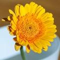 Orange gerbera flower in vase Royalty Free Stock Photo