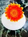 Orange gerbera flower in white ceramic vase on stone table Royalty Free Stock Photography